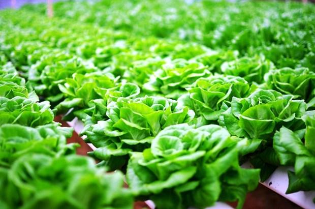 推进绿色农产品生产 机遇与挑战并存 hinh anh 1