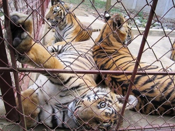 严厉打击贩卖野生动物的非法交易行为 hinh anh 1