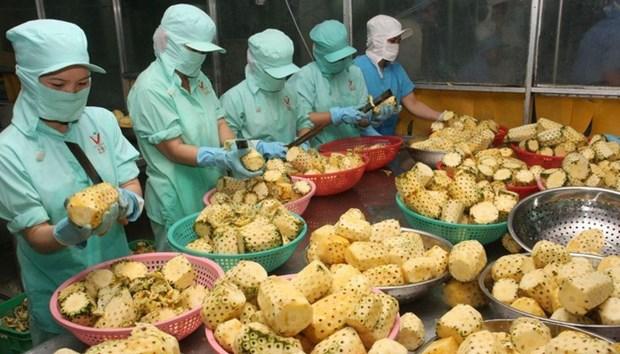 2019年越南农产品出口总额有望达到420亿至430亿美元 hinh anh 1
