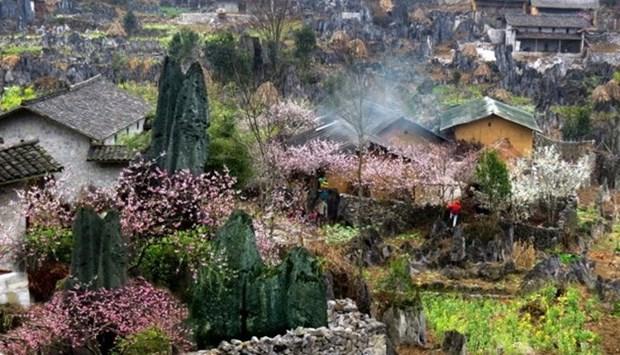 河江省同文岩石高原全球地质公园吸引成千上万游客前来参观游览 hinh anh 2