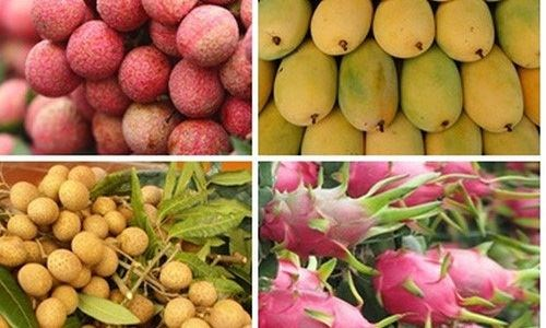 创新思维促进农产品对中国市场的出口 hinh anh 1