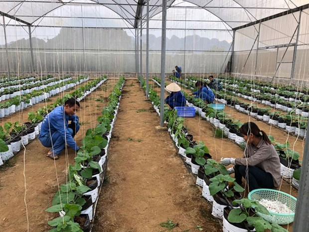 越南种植业力争2019年出口额达210亿美元 hinh anh 1