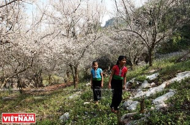 2019年新春佳节假期全国各旅游景点吸引大量游客前来参观旅游 hinh anh 2