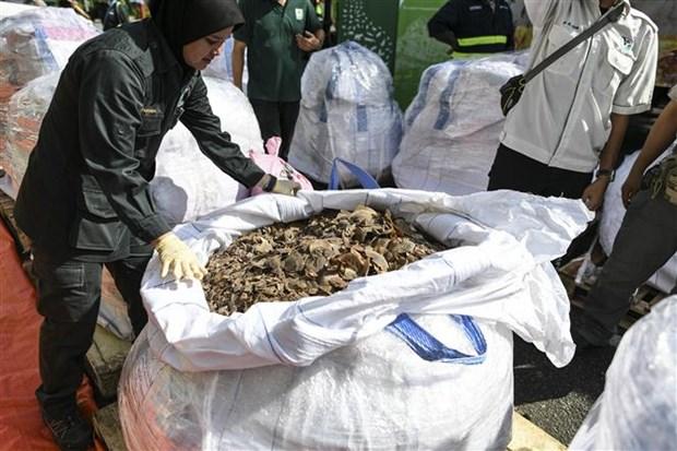 马来西亚缴获30吨穿山甲和穿山甲鳞片 价值为历年之最 hinh anh 2