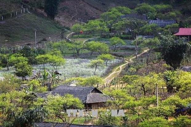 越南山罗省木州高原茶文化之美 hinh anh 2