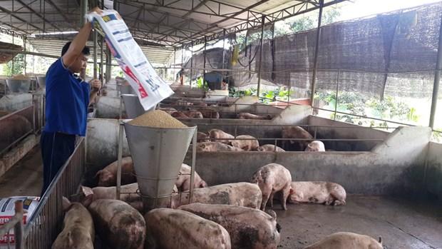 同奈省多措并举推动畜牧业提质增效 hinh anh 1