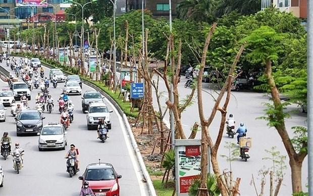 河内市力争2019年种植40万棵树 hinh anh 1