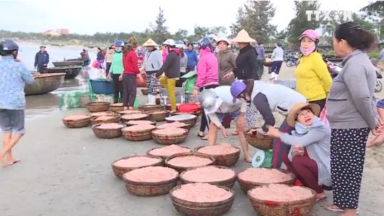 岘港渔民出海满载而归 hinh anh 1
