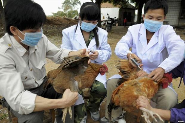 越南批准2019-2025年阶段防控禽流感国家行动计划 hinh anh 1