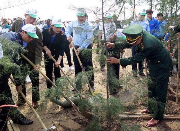 南定省在该省沿海地区种植3000棵树共同建设美丽家园 hinh anh 1