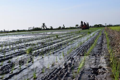 越南努力加快增长模式转型和新农村建设步伐 hinh anh 1