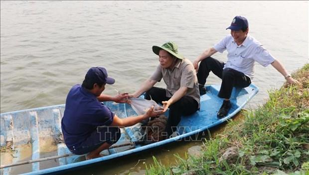 农业与农村发展部部长阮春强:越南是查鱼产业的潜在市场 hinh anh 1