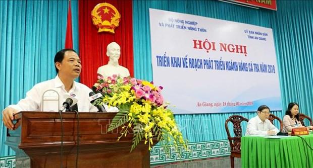 越南查鱼产业走向可持续发展 hinh anh 1
