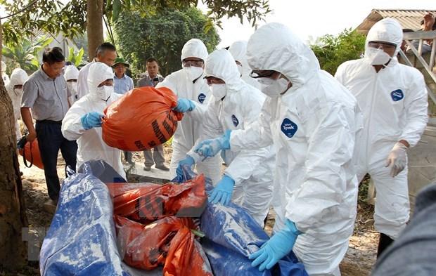 阮春福总理指示采取紧急措施控制非洲猪瘟疫情 hinh anh 1