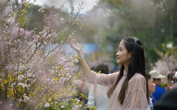 2019年日本-河内樱花节将展现世界奇观 hinh anh 1