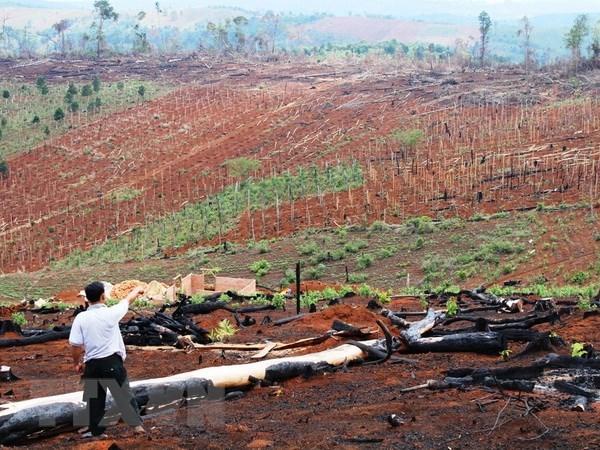 越南林业产业主动采取措施 满足市场的要求 hinh anh 2