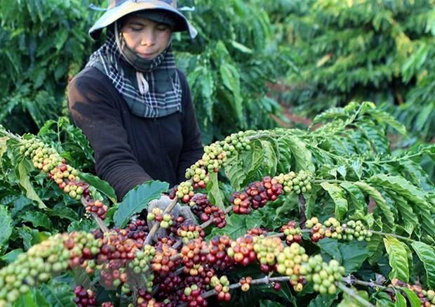 1-2月越南农林水产品出口额有所略降 hinh anh 2