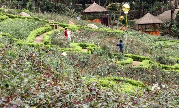 越南最大玫瑰花园——河内居民新奇的春游目的地 hinh anh 1