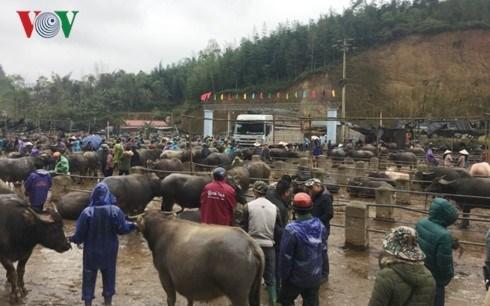 北部山区最大而独特的家畜集市 hinh anh 1