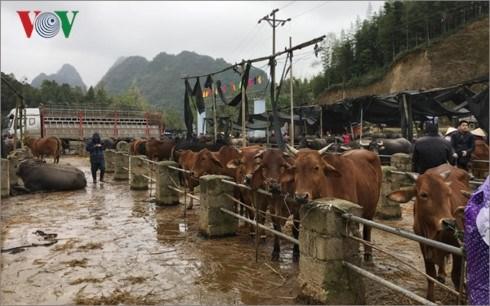 北部山区最大而独特的家畜集市 hinh anh 2