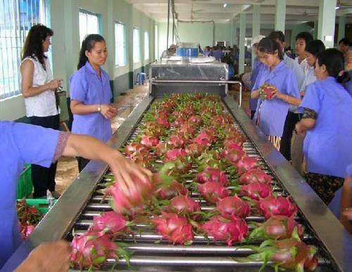 今年前两月蔬果出口额达5.84亿美元 hinh anh 2