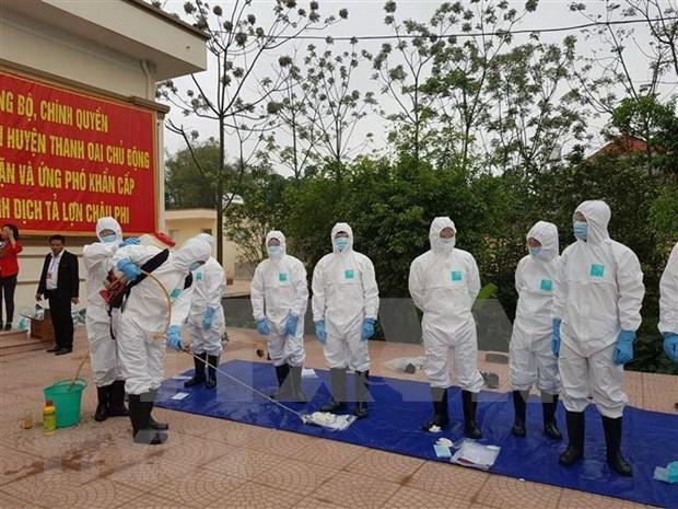 越南各地集中防范非洲猪瘟疫情的传播和蔓延 hinh anh 1