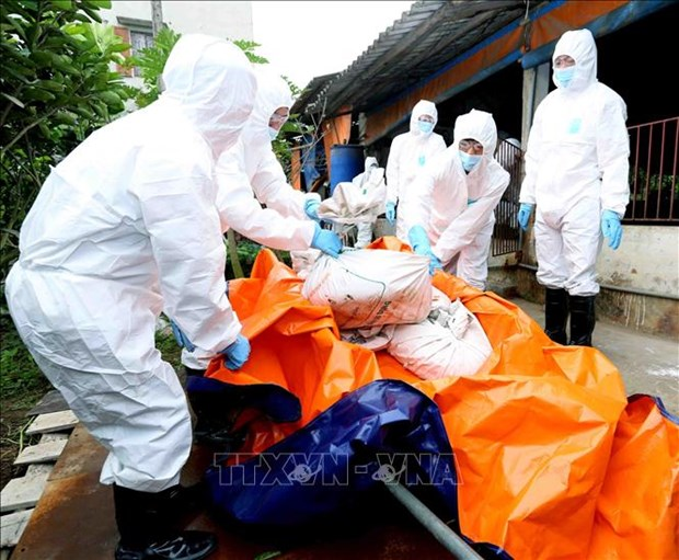 越南各地集中防范非洲猪瘟疫情的传播和蔓延 hinh anh 2
