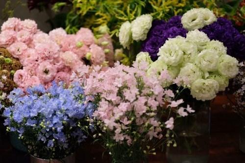 三八国际妇女节:进口的花卉品种受消费者的喜爱 hinh anh 1