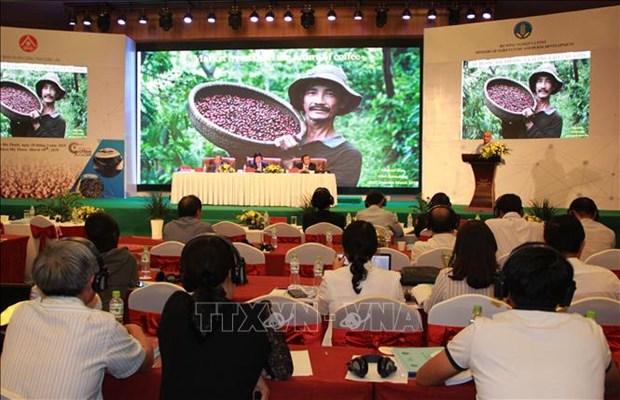 提高越南咖啡价值 促进特产咖啡发展 hinh anh 1