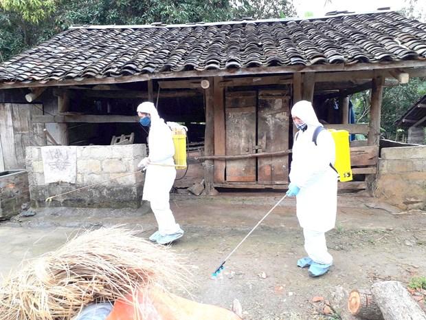 越南全国各省市积极开展非洲猪瘟疫情防控布置工作 hinh anh 1
