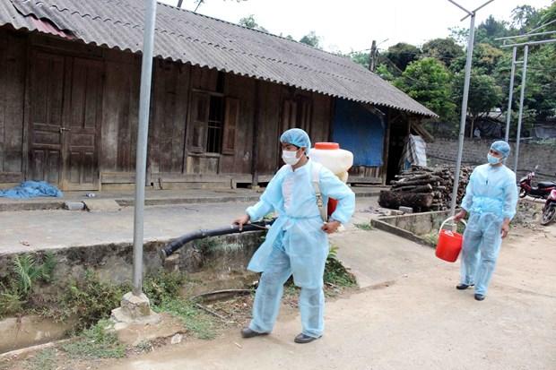 越南莱州省出现首例非洲猪瘟 hinh anh 2