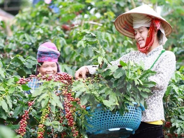 多措并举提升越南咖啡价值 hinh anh 1