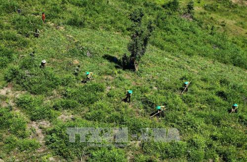 2020年承天顺化省森林覆盖率将达57% hinh anh 1