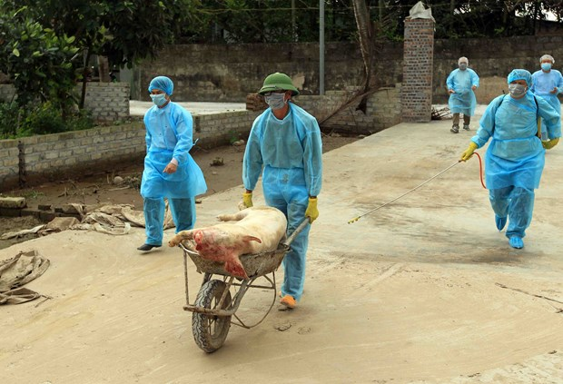 越南成立防控非洲猪瘟国家指导委员会 hinh anh 1