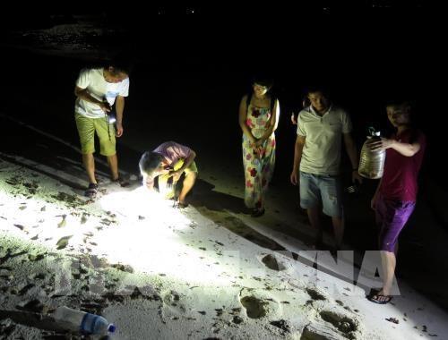 夜间捕蟹—李山岛的有趣旅游体验 hinh anh 1
