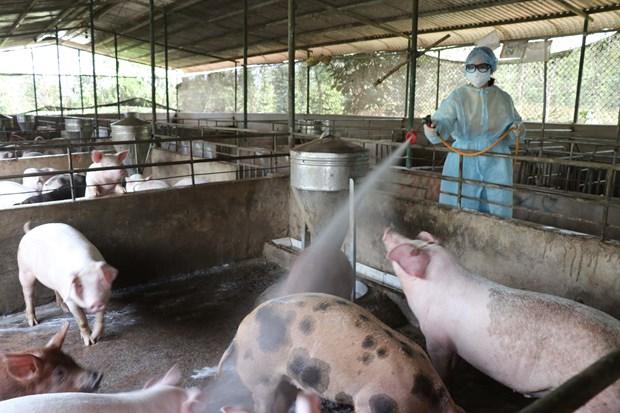 越南农业与农村发展部长:尽最大努力防止非洲猪瘟扩散到南方地区 hinh anh 1