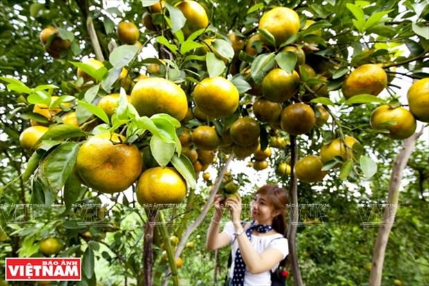 九龙江三角洲地区加强对接推动旅游发展 hinh anh 2
