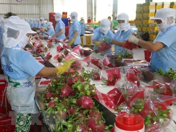 越南努力加强对中国的农产品出口 hinh anh 1
