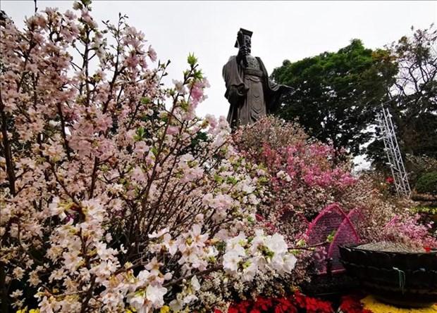 2019年河内日本樱花节开幕 hinh anh 2