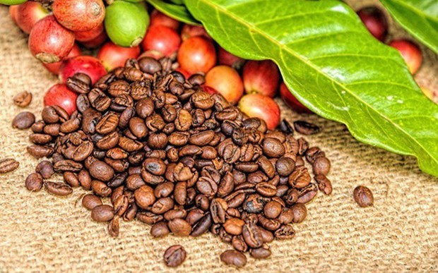 越南企业努力开拓速溶咖啡市场 hinh anh 1