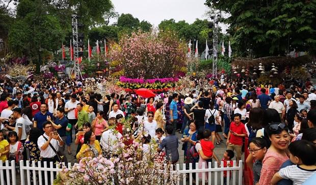 第四次河内日本樱花节将再延续一天 hinh anh 1