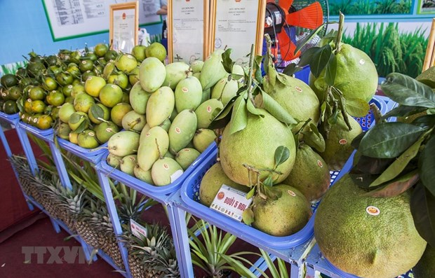 2019年第一季度越南蔬果出口额下降9.3% hinh anh 1