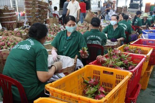 越南前江省今年第一季度货物出口额同比增长14.5% hinh anh 1