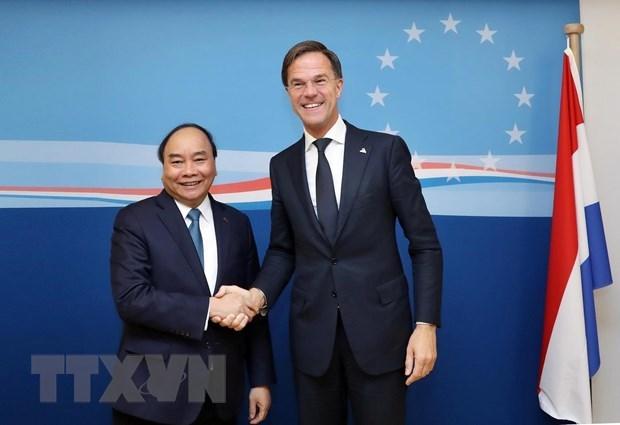 越南驻荷兰大使吴氏和:越荷两国关系将升级为全面伙伴关系 hinh anh 1