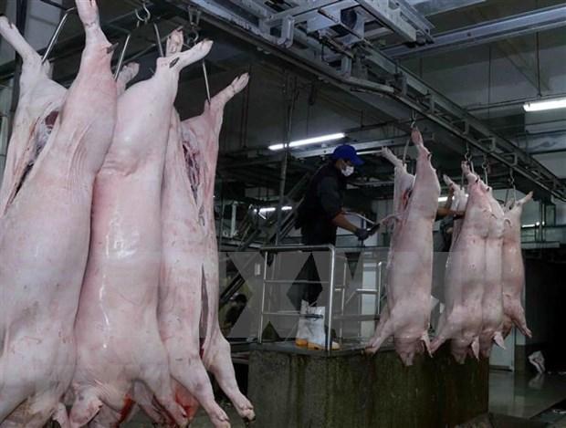 12个非洲猪瘟疫区30天来不出现新发病例 hinh anh 1