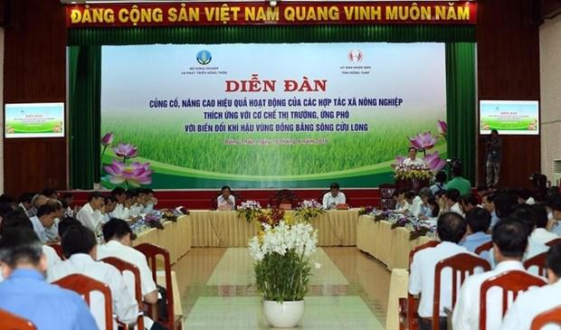 越南九龙江三角洲农业合作社适应市场经济和应对气候变化 hinh anh 1