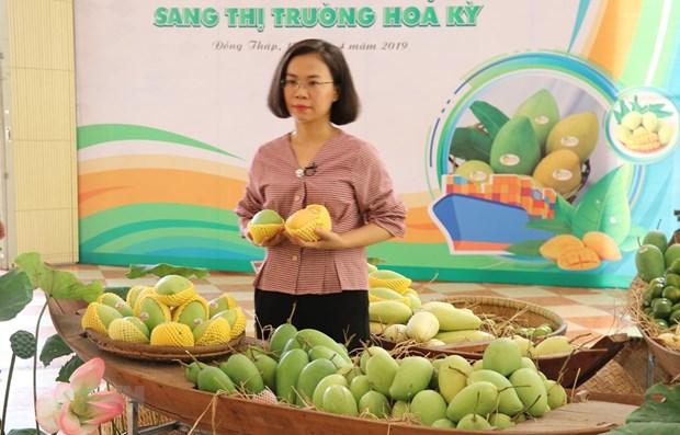 越南首批芒果出口到美国市场 hinh anh 1