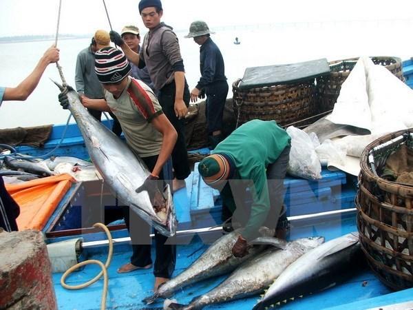 越南对中国金枪鱼出口突增 hinh anh 1