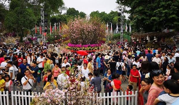 樱花节创下越南纪录 hinh anh 2