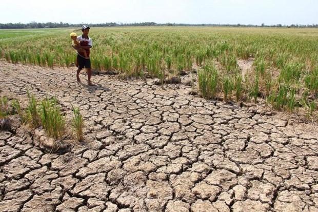 联合国-东盟联合报告:东南亚干旱情况未来可能会更加严重 hinh anh 1